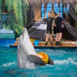 Дельфинарии, океанариумы Рамони