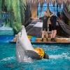 Дельфинарии, океанариумы в Рамони